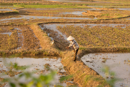 Vietnamese planting rice on a rice paddy field VietNam Stock Photo