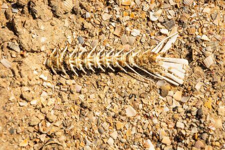 Fish bones on the beach,drought, dead fish