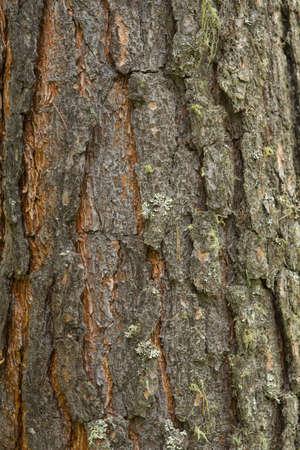 Texture shot of brown tree bark, filling
