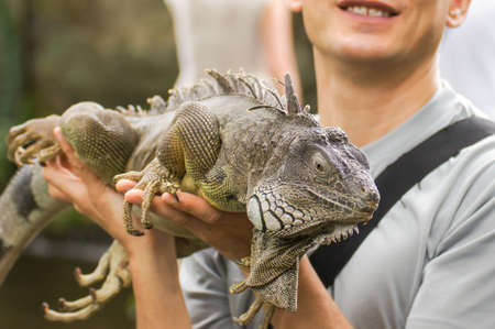 Amazing close up photo man holding in his arms green lizard iguana on background scenic tropical green nature at sunny summer day in Paradise Park Farm Samui / Asia, Thailand, Koh Samui