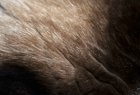 Closeup of a fur texture from a cat`s head Stock Photo