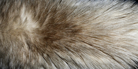 Closeup of a fur texture from a cats torso