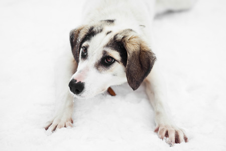 Funny playful mixed breed dog lying on snow