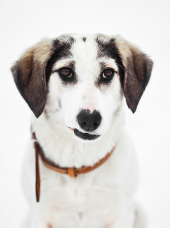 Funny mixed breed dog on snow