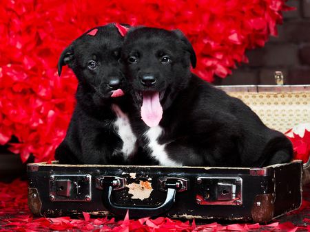 Two Valentine puppies in retro suitcase on red hearts background Stock Photo
