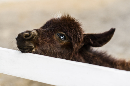 Portrait of cute baby donkey behind white fence on farm 스톡 콘텐츠