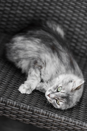 Gray cat indulging in bliss, enjoying lying on bench