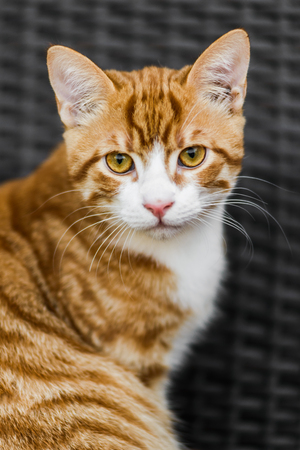 Close up portrait of cute young red cat sitting on bench Stock Photo