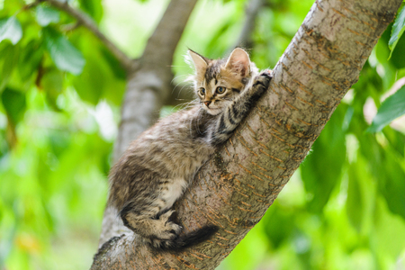 Cute funny curious kitten cat lying on tree in garden on sunny summer day Stock Photo