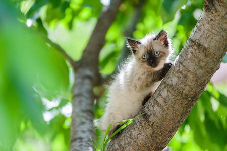 Cute funny curious kitten cat climbing tree in garden on sunny summer day Stock Photo