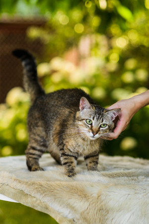 Owner cuddling striped gray cat in summer nature background Banco de Imagens