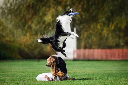 border collie jumping high catching flying disk, summer outdoors dog sport competition Imagens