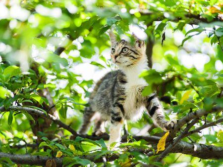 Cute funny curious kitten cat climbing tree ready to jump