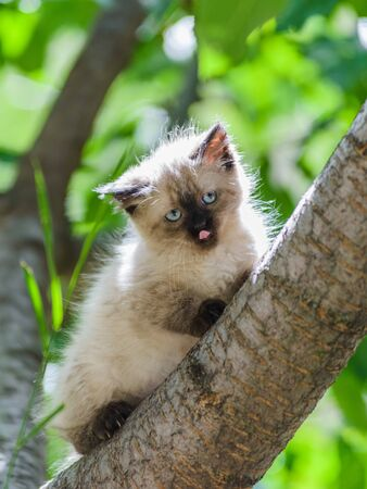 Cute funny curious kitten cat climbing tree licking its nose with tongue