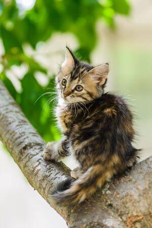 Cute funny curious kitten cat climbing tree in garden on sunny summer day 版權商用圖片