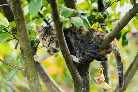 Cute funny curious kitten cat climbing tree ready to jump