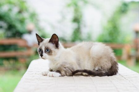 Portrait of cute white and gray kitten cat looking for catch Standard-Bild