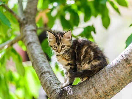 Cute funny curious kitten cat climbing tree in garden on sunny summer day