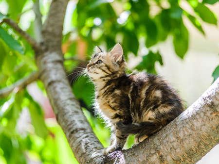 Cute funny curious kitten cat climbing tree in garden on sunny summer day Standard-Bild