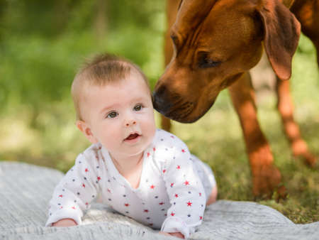 Big dog and cute baby crawling in garden