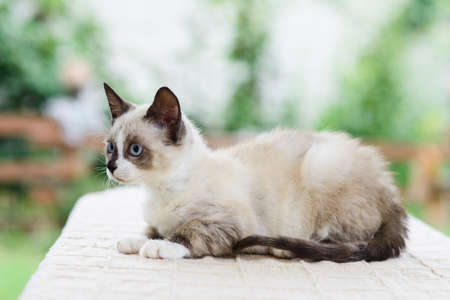 Portrait of cute white and gray kitten cat looking for catch 免版税图像