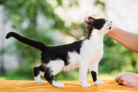Owner cuddling black and white cat in summer nature background