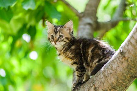 Cute funny curious kitten cat climbing tree in garden on sunny summer day 免版税图像