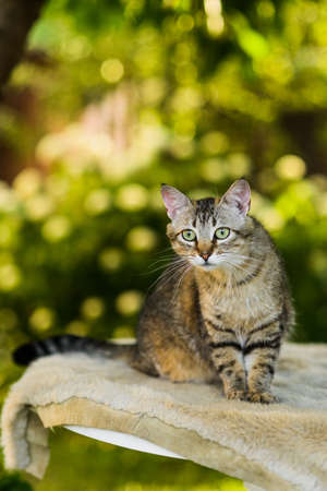 Portrait of cute attentive striped gray cat looking for catch in summer nature background