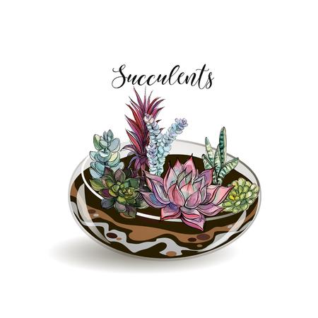 Succulents in glass aquariums. Flower decorative compositions. Graphics. Watercolor Vector Stockfoto - 116007429