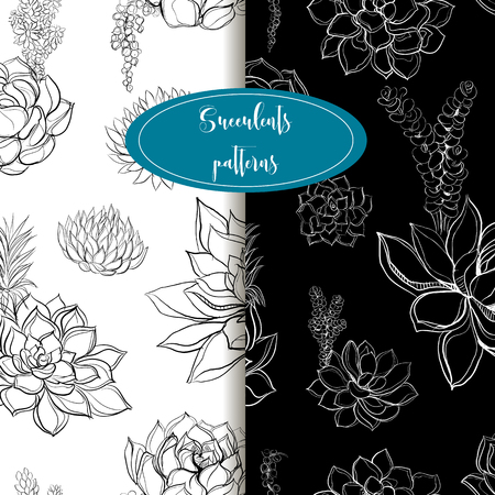 Set of seamless patterns. Succulents. Graphics. Gentle tone Vector