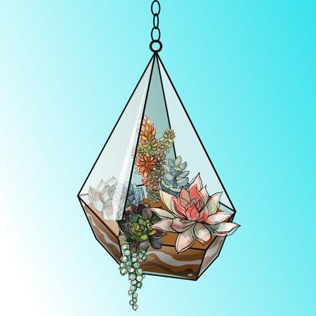 Flower arrangement of succulents in a geometric glass aquarium. Vector Illustration