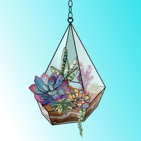 Flower arrangement of succulents in a geometric glass aquarium. Vector.