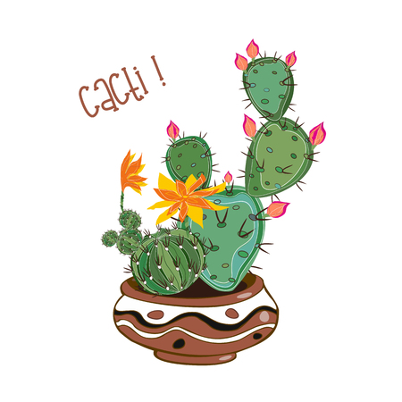 Cacti in a clay pot . Cacti in a pot . Vector illustration