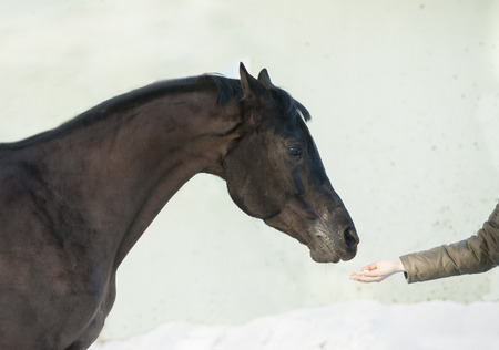 horse head with human