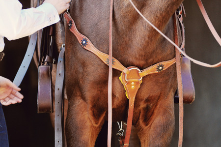 buckskin horse: horse standing with western saddle and bridle on detail