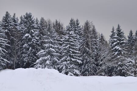 of pano: forest covered by snow