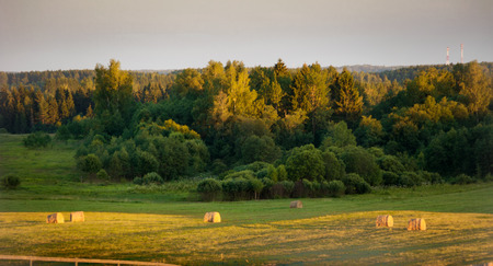 undulating: Beautiful rural countryside with crop fields on undulating hills in evening light