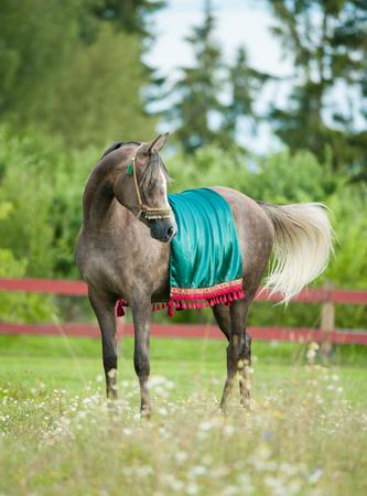 jewlery: Grey arabian horse in national arabic harness