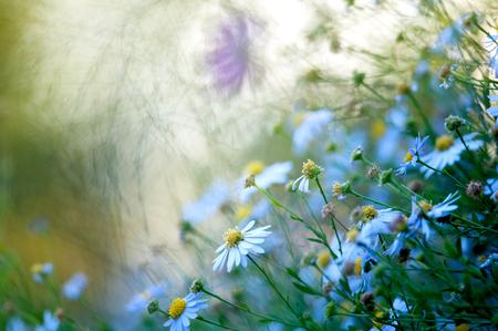 champ de fleurs: fleurs des champs sur le coucher du soleil agrandi