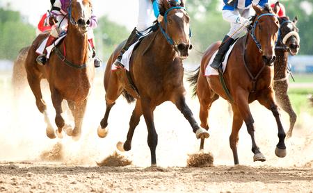 racehorses: racehorses on hippodrome track Stock Photo