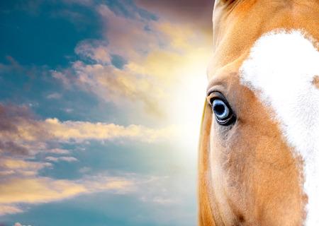 blue eye of akhal-teke horse closeup with blue sky behind Stock Photo