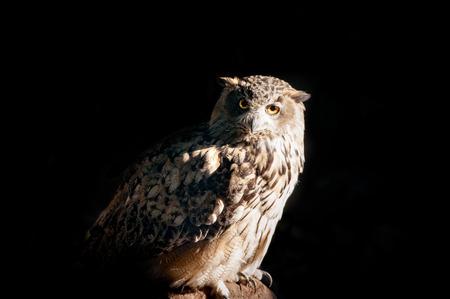 owl sitting on a stone on a black