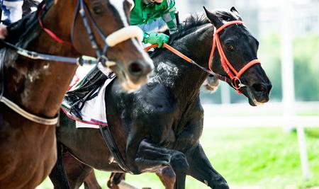 Zwart volbloed paard op de race