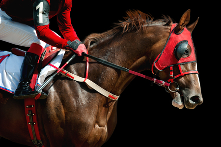 Jokey on a thoroughbred horse in red mask runs isolated on black background