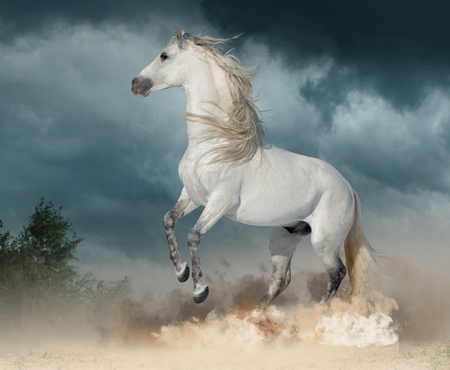 andalusian stallion rears in the dust with stormy skies behind