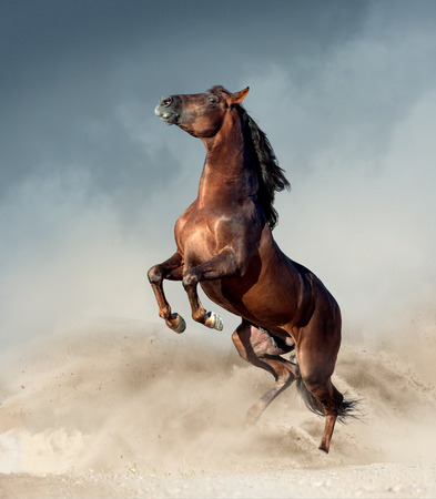 brown andalusian horse rearing up in desert