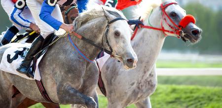 arabian horses on the race