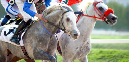 arabian horses on the race