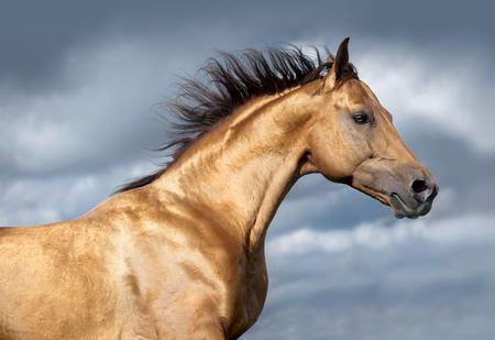 golden don horse portrait on stormy skies portrait