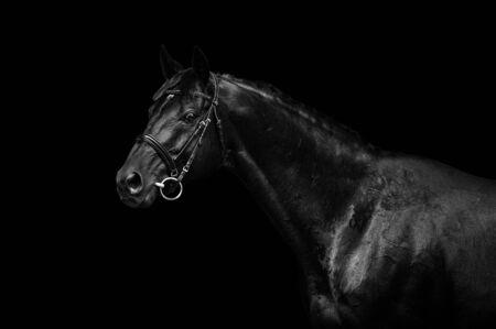black horse on black background in low key 写真素材